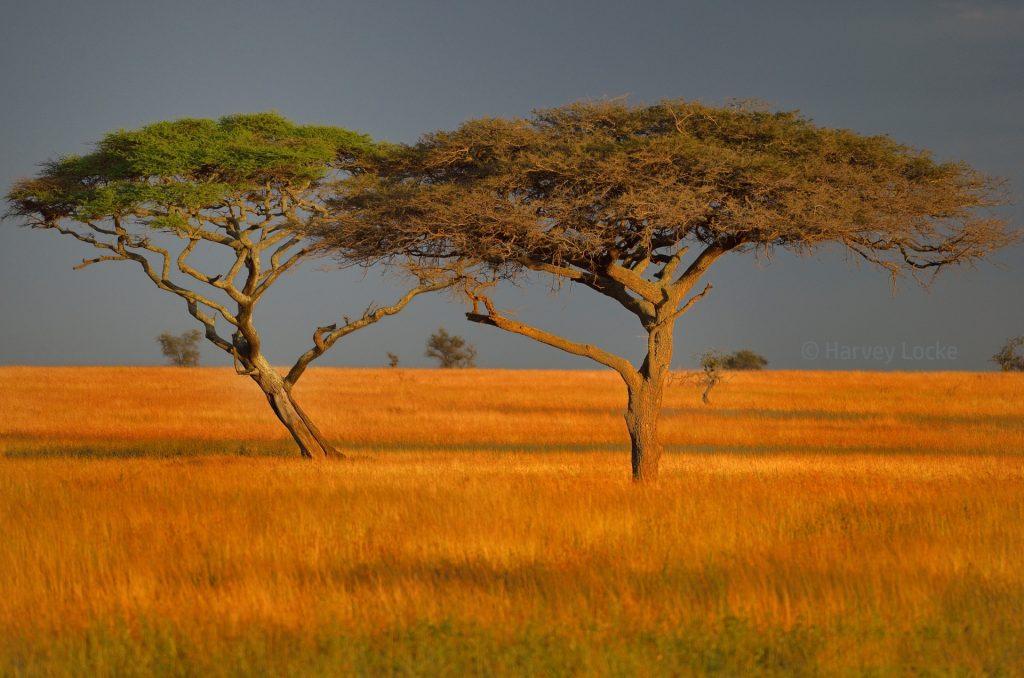Serengeti National Park, Tanzania, 2013